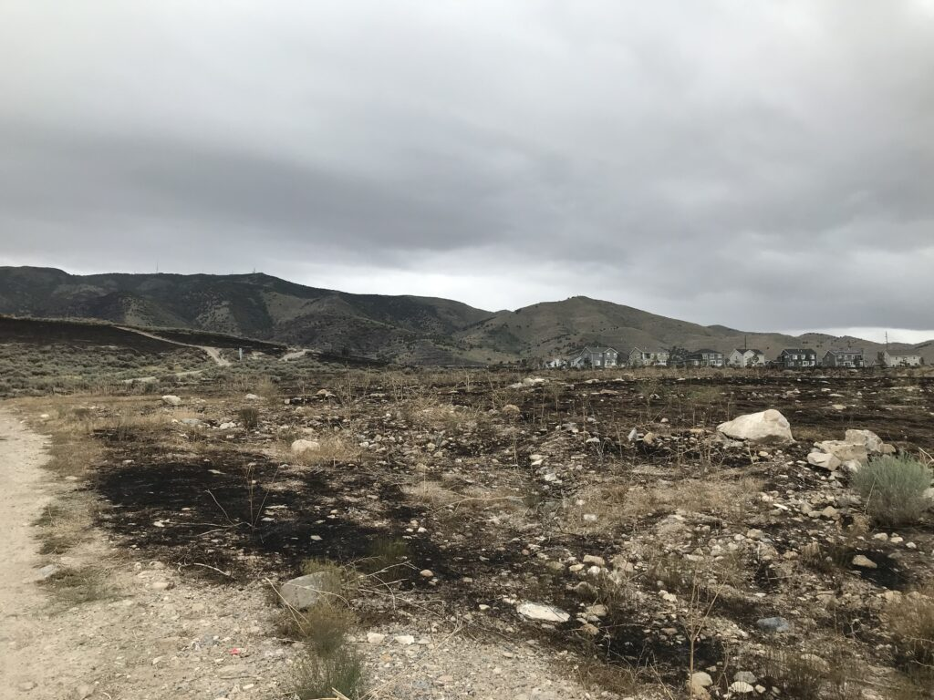 Burned area next to homes from Knolls Fire